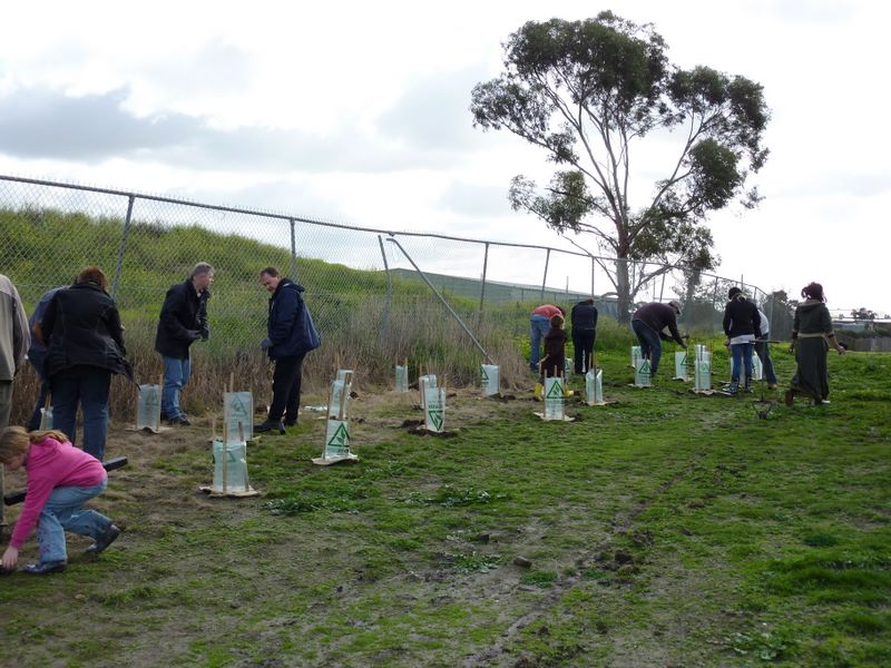 2010 August: National Tree Planting Day