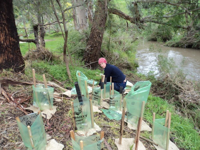 2012 August: Planting downstream Silurian cliff