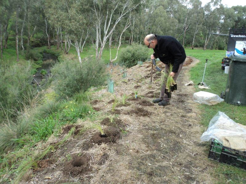 2014 July: Caravan Park site stream bank restoration