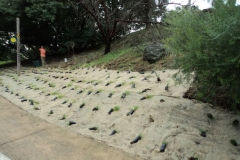 2012 June: Confluence planting