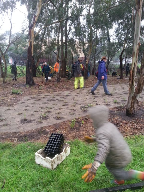 2014 June: Confluence Area Revegetation - World Environment day