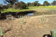 2012 September: Ephemeral wetlands preparation