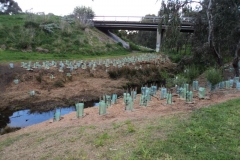 2012 September: Planting Kodak bridge